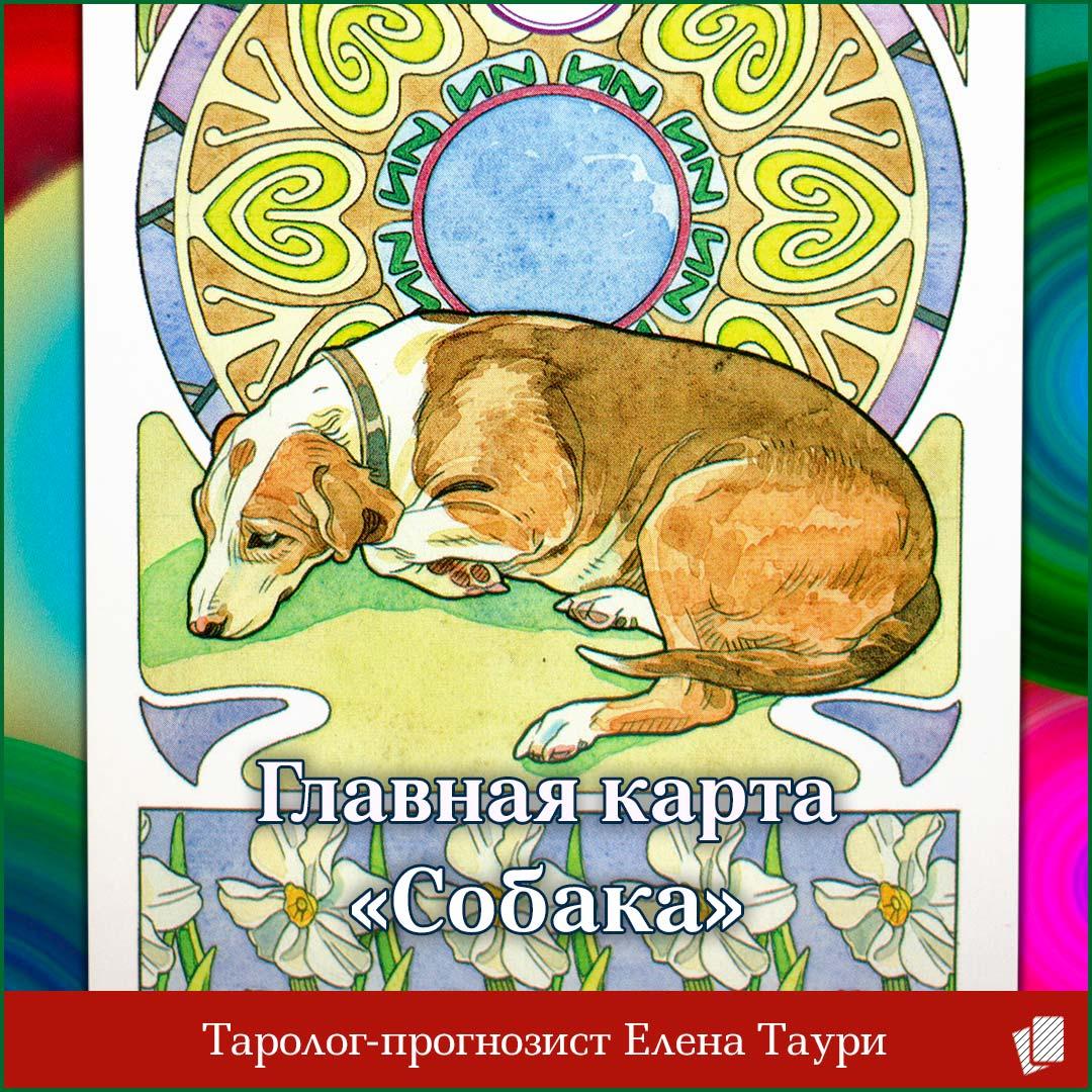 Таро главная карта недели с 21 по 27 сентября – Собака